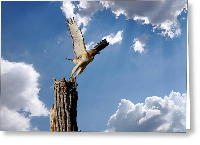 Red-tailed Hawk Perch Series 5 Greeting Card by Roy Williams