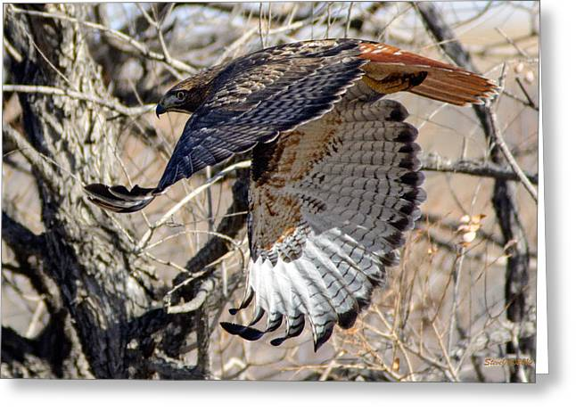 Red Tailed Hawk Sequence #4 Greeting Card by Stephen  Johnson