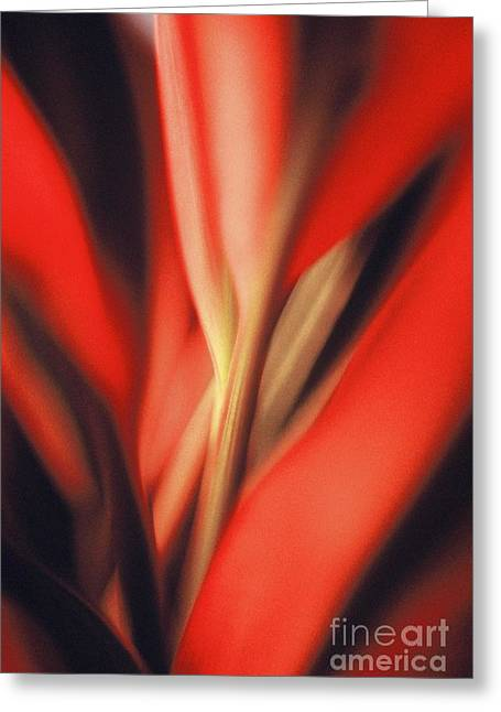 Greeting Card featuring the photograph Red Ti by Ranjini Kandasamy