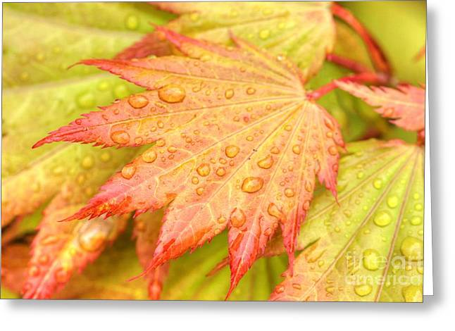 Red Tip Leaf Greeting Card