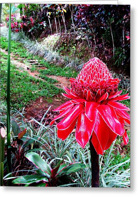 Red Torch Ginger Flower Two Greeting Card by Tina M Wenger