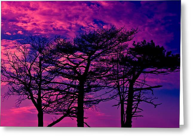 Greeting Card featuring the photograph Red Trees by David Stine