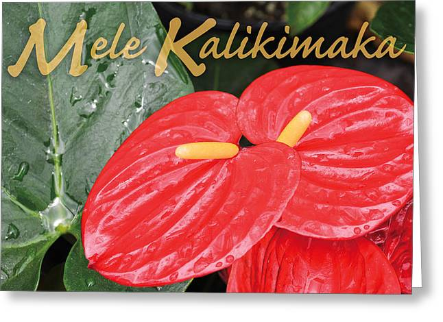 Red Tropical Anthuriums Greeting Card by Denise Bird