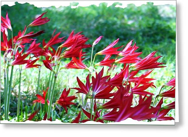 Greeting Card featuring the photograph Red Trumpets by Ellen O'Reilly
