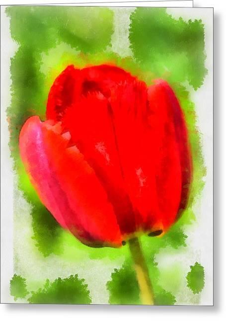 Red Tulip Aquarell Greeting Card by Matthias Hauser