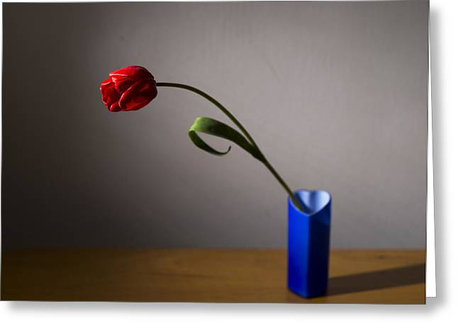 Red Tulip Greeting Card by Ivan Vukelic