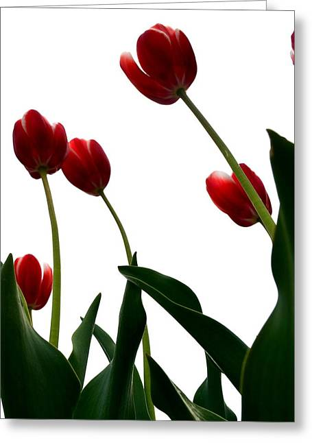 Red Tulips From The Bottom Up Vl Greeting Card by Michelle Calkins