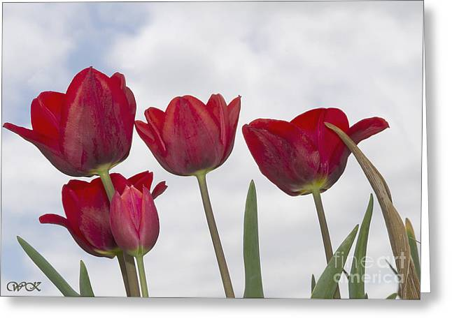 Greeting Card featuring the photograph Red Tulips by Wanda Krack
