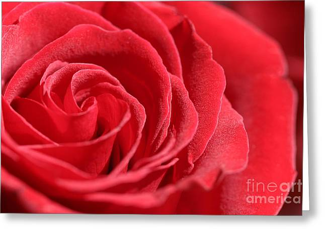 Red Velvet Greeting Card by Michelle Wiarda