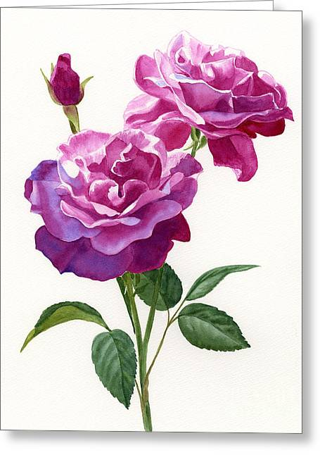 Red Violet Roses With Bud On White Greeting Card by Sharon Freeman