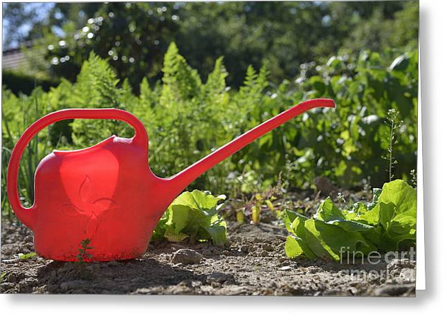 Red Watering Can In Vegetable Garden Greeting Card by Sami Sarkis