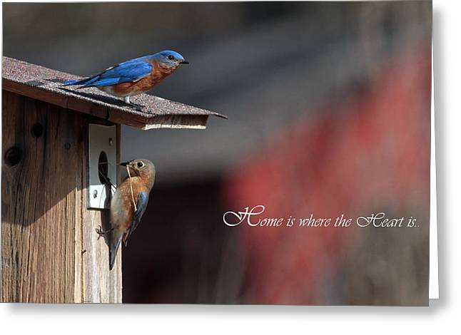 Red White And Blue Birds Greeting Card by Michael Rucci