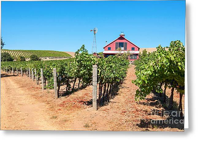 Red Wine Barn - Beautiful View Of Wine Vineyards And A Red Barn In Napa Valley. Greeting Card