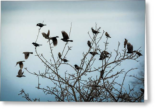 Red Winged Blackbirds Greeting Card by Jan M Holden