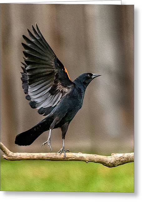Red-winged Blackbird Takes Flight Greeting Card by Rick Barnard