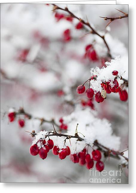 Red Winter Berries Under Snow Greeting Card