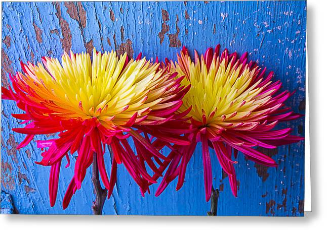 Red Yellow Mums Against Blue Wall Greeting Card