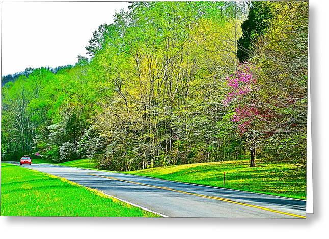 Redbud And Dogwood In Spring At Mile 363 Of Natchez Trace Parkway-tennessee Greeting Card