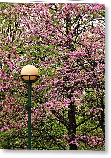 Redbud And Lamp Greeting Card by Tom and Pat Cory