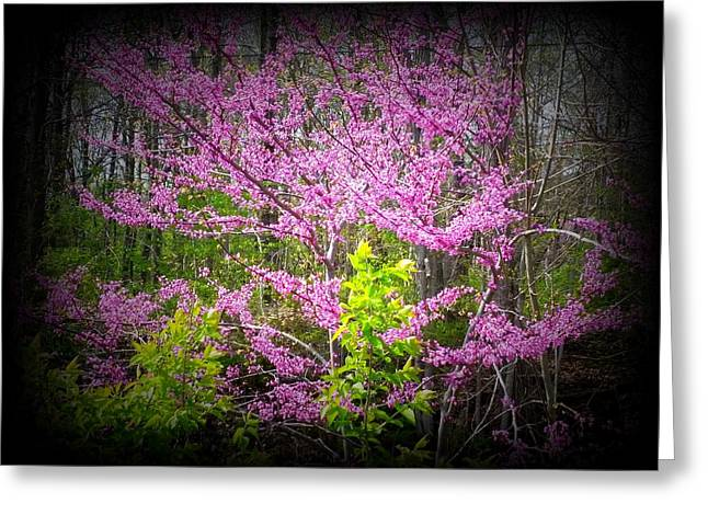 Redbud Detail Greeting Card by Michael L Kimble