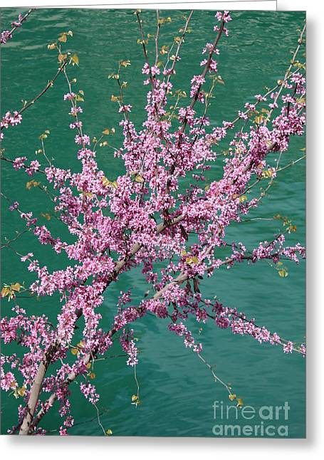 Redbuds Over San Antonio River Greeting Card