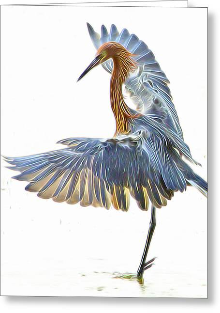 Reddish Egret 1 Greeting Card by William Horden