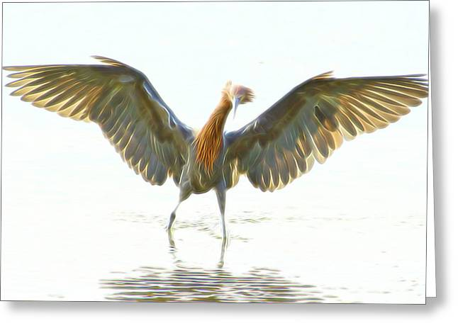 Reddish Egret 2 Greeting Card by William Horden