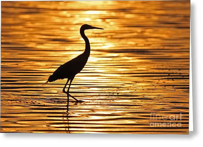 Reddish Egret At Sunset Greeting Card