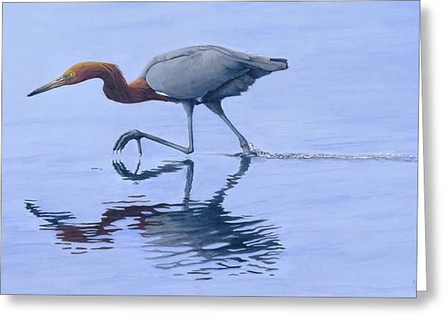 Reddish Egret Greeting Card by Kirsten Wahlquist