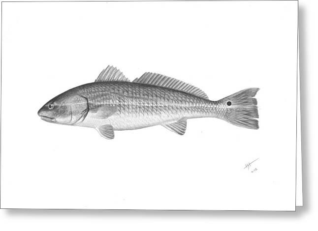 Redfish - Scientific Greeting Card