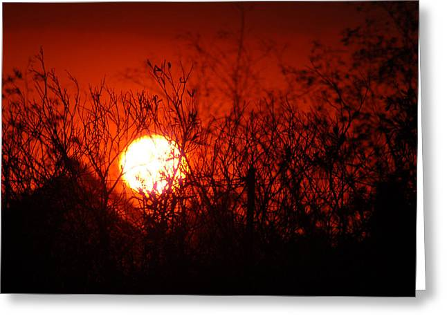 Greeting Card featuring the photograph Redorange Sunset by Matt Harang
