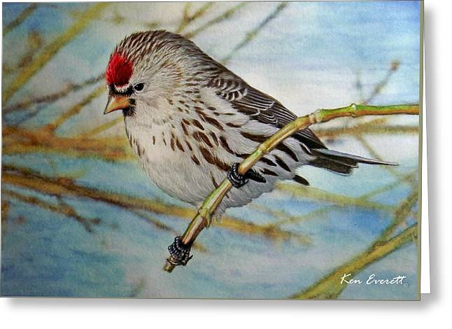 Redpoll   Greeting Card by Ken Everett