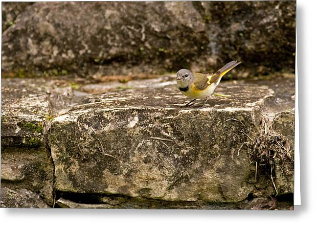 Redstart In Ruins Greeting Card