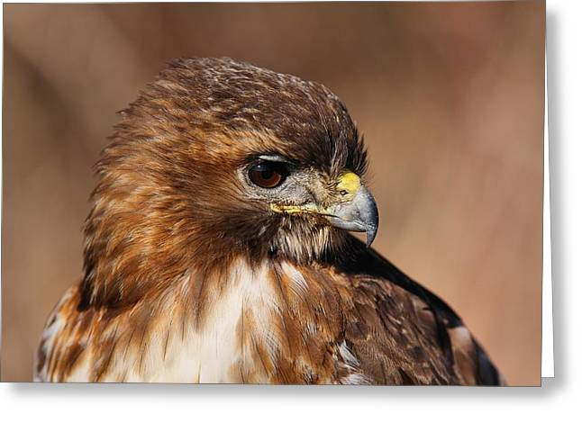 Redtail Portrait Greeting Card