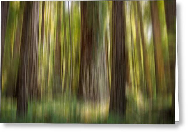Redwood Dream Greeting Card