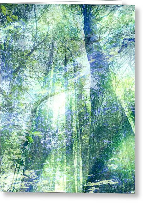 Redwood Dreams Greeting Card by Nicole Swanger