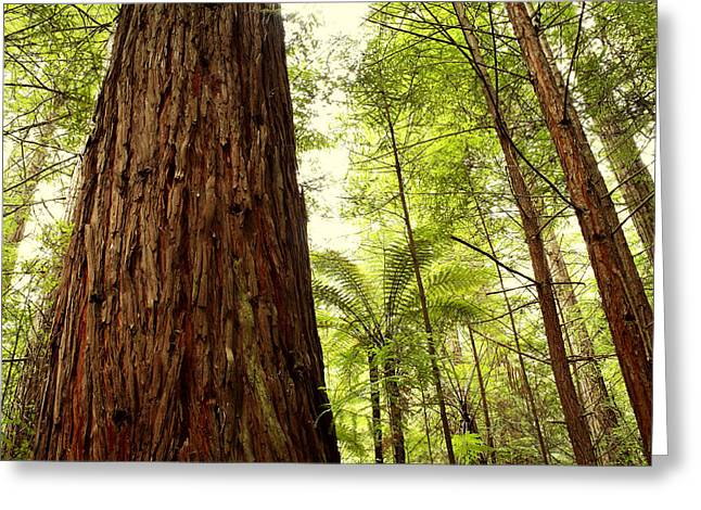 Redwood Forest Greeting Card by Les Cunliffe