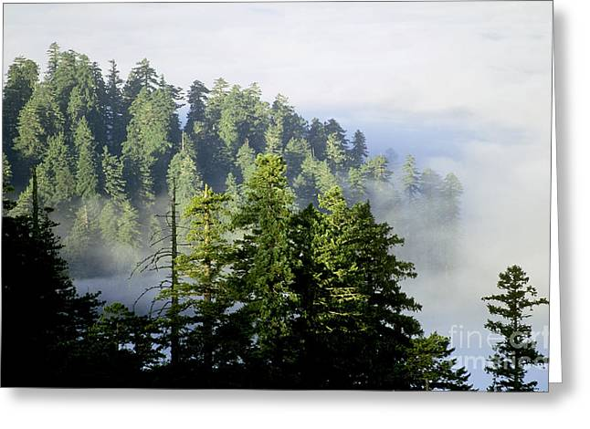 Redwood National Park Greeting Card by Jim Corwin