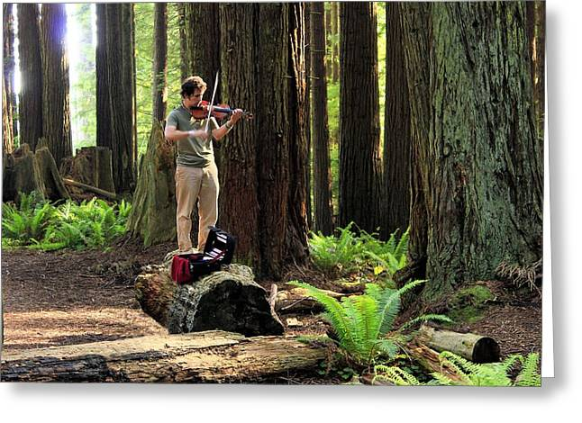 Redwood Symphony   Greeting Card