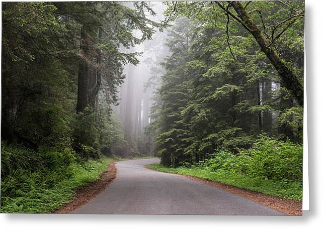 Redwoods In Northern California Greeting Card