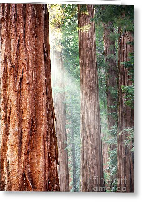 Redwoods In Yosemite Greeting Card by Jane Rix