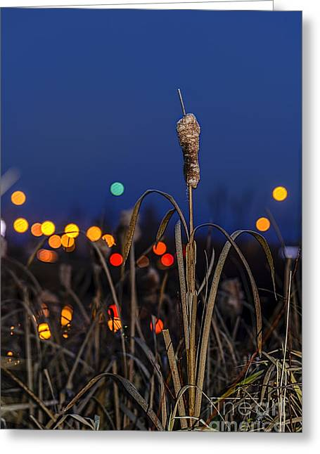 Reed At Twilight Greeting Card