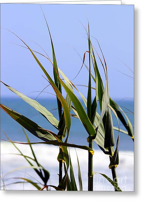 Reed Beach Greeting Card by Henrik Lehnerer
