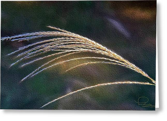 Reed Grass Greeting Card by Ludwig Keck