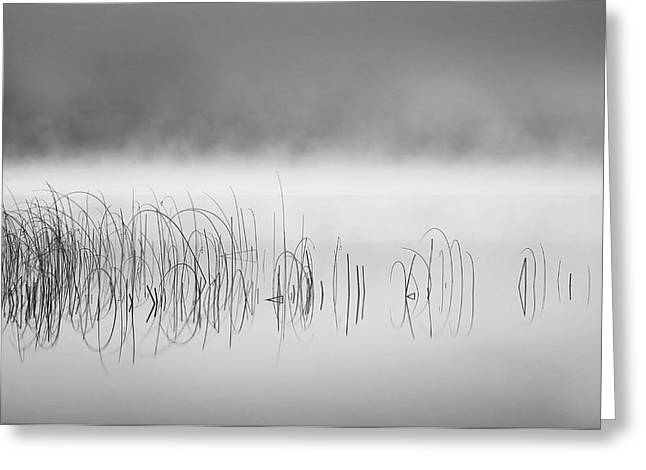 Reed In Fog Greeting Card by Benny Pettersson