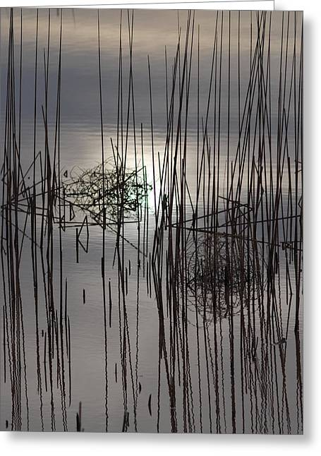 Reed Reflection 3 Greeting Card by T C Brown