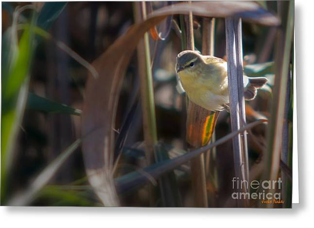 Reed Warbler Greeting Card by Jivko Nakev