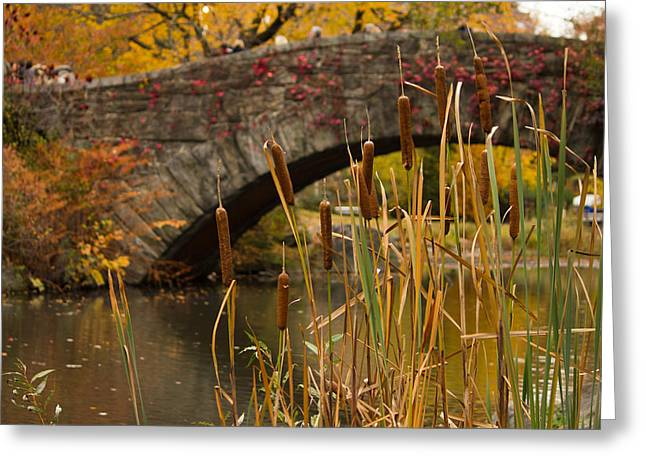 Greeting Card featuring the photograph Reeds And Gapstow Bridge by Jose Oquendo