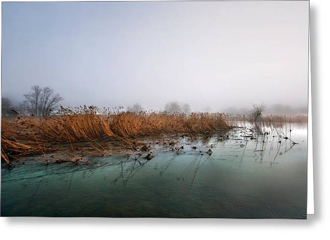 Reeds Greeting Card by Graham Hawcroft pixsellpix