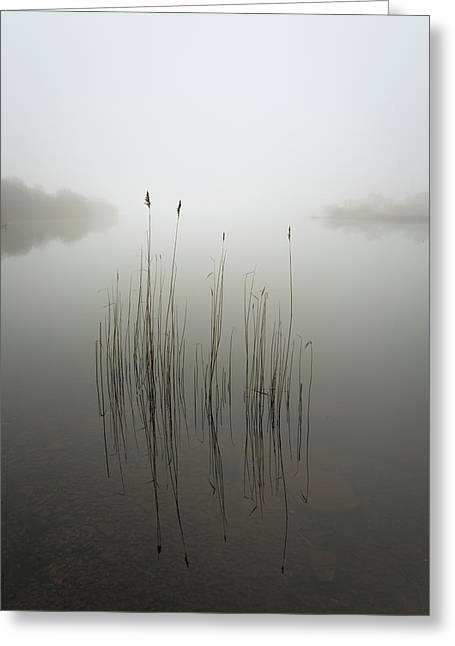 Reeds In The Mist Greeting Card